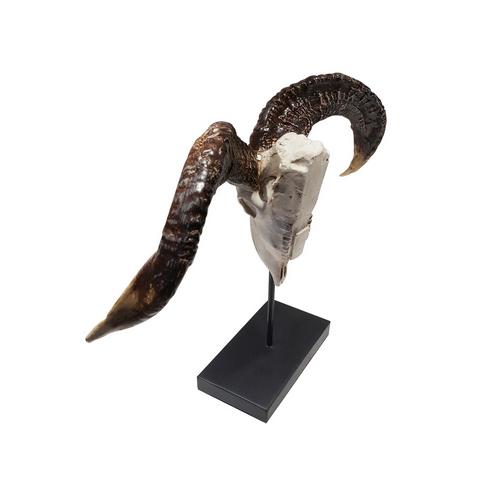 Schedel en hoorns van een ram aziatische woonaccessoires for Schedel hoorns